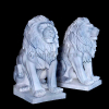 lion_054