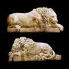 lion_057