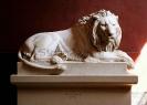 lion_184