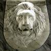 lion_204