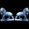 lion_070