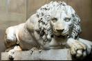lion_138