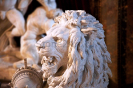 lion_187