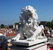 lion_112