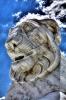 lion_159