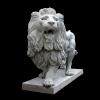 lion_062