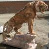 lion_239