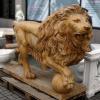 lion_223