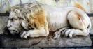 lion_179