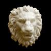 lion_035
