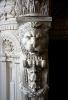 lion_206