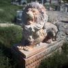 lion_216