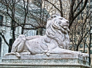 lion_155