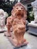 lion_094