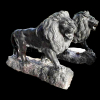 lion_072