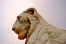 lion_195