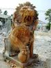 lion_099