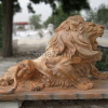 lion_224