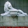 lion_244