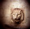 lion_208