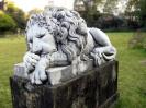 lion_174