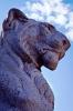 lion_191