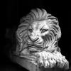 lion_088