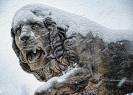 lion_157
