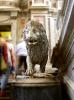 lion_185