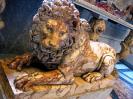 lion_182