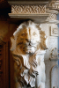 lion_205