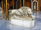 lion_176