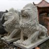 lion_222