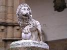 lion_137