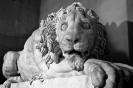 lion_149