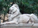 lion_152