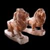 lion_246