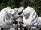 lion_104