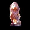 lion_084
