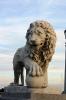 lion_196
