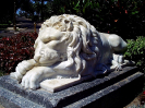 lion_177