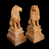lion_044