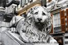 lion_134