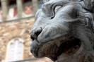 lion_130