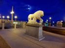 lion_188