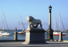 lion_194