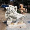lion_123