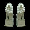 lion_049