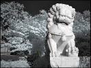 lion_150