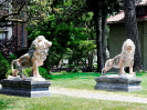 lion_186